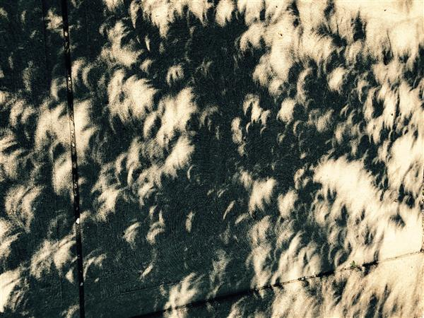 The Solar Eclipse of 2017 provides a dazzling array of crescent moons on a Saint Louis sidewalk.
